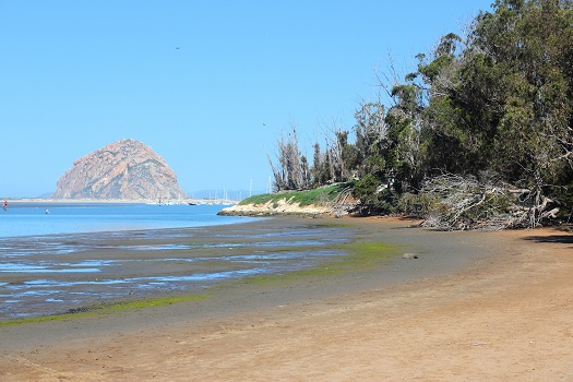 Great Ways to Enjoy the Beach During Your Trip to Morro Bay in Morro Bay, CA